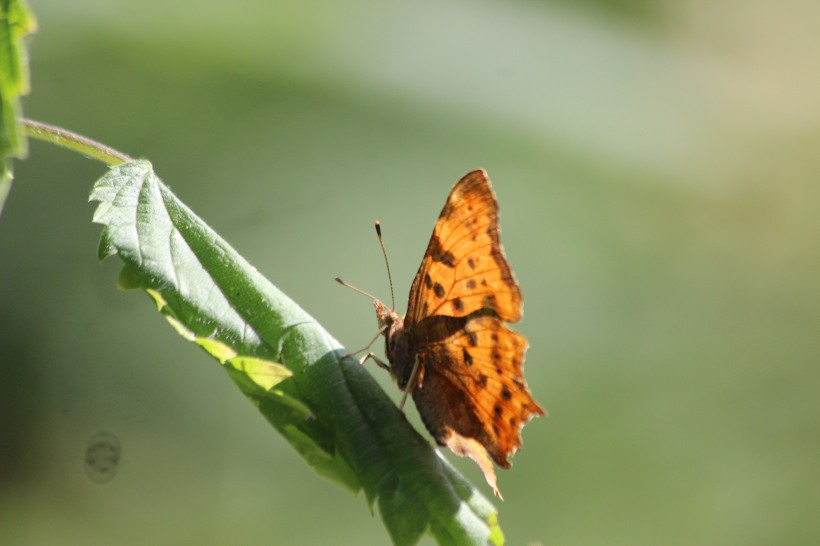 Comma at SHW (7)