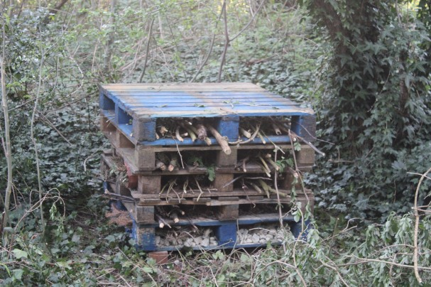 bug palace at garthorne road (2)